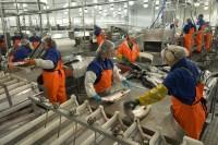 Praca w Norwegii na produkcji bez znajomości języka od czerwca 2013