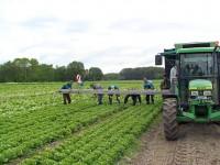 Oferty pracy w Niemczech w rolnictwie przy zbiorach owoców i warzyw 2013