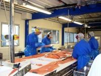 Praca w Norwegii od zaraz na produkcji rybnej przy pakowaniu Bergen