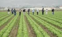 Rolnictwo praca w Niemczech przy zbiorach warzyw od zaraz Dortmund