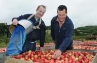 Anglia praca sezonowa przy zbiorach owoców jabłek bez języka Bristol