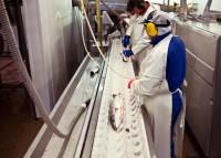 Przetwórnia rybna praca w Danii na produkcji od zaraz bez języka duńskiego