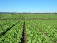 Fizyczna praca we Francji w rolnictwie na farmie bez znajomości języka francuskiego