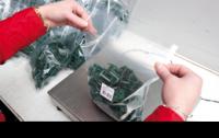Praca Norwegia przy pakowaniu na produkcji bez znajomości języka dla par Oslo