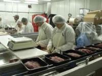 Praca w Holandii na produkcji bez znajomości języka holenderskiego Holten