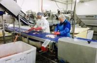 Praca w Norwegii bez znajomości języka na produkcji pakowanie Bergen