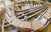 Praca w Holandii bez znajomości języka i doświadczenia na produkcji kanapek