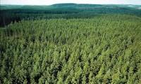 Sezonowa praca w Szwecji w Röjning przy pielęgnacji lasu