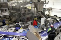 Norwegia praca bez znajomości języka na produkcji rybnej Moss 2014