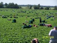 Niemcy praca przy zbiorach warzyw 2014 bez znajomości języka Dortmund