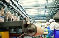 Praca w Danii na produkcji mięsnej bez znajomości języka od zaraz