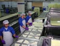 Praca Holandia w fabryce serów – uczeń na produkcji Culemborg