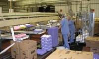 Anglia praca przy pakowaniu i sortowaniu jaj Ledds bez znajomości języka