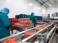 Praca Anglia przy pakowaniu owoców i warzyw od zaraz Chartham