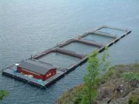 Fizyczna praca w Norwegii przy rybach bez znajomości języka od zaraz Horten