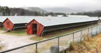 Dam pracę w Norwegii przy pakowaniu, sortowaniu jaj sezon 2014 Lardal