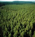 Fizyczna praca Dania przy sadzeniu drzew bez języka Hovedstaden